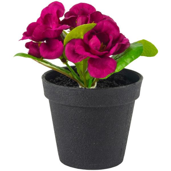 Mini Primula in Pot Purple