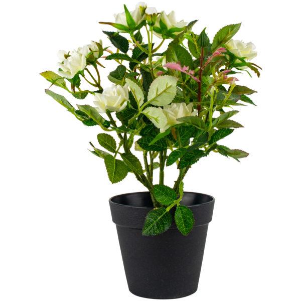 Mini Rose in Pot White