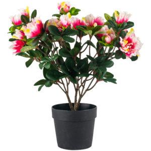 Azalea in Pot Pink