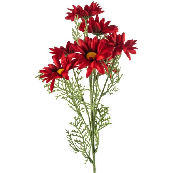 Transvaal Daisy Red