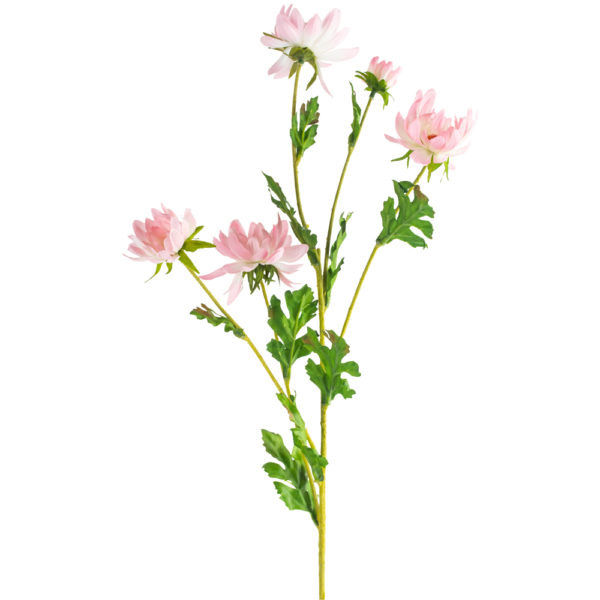 Daisy Light Pink