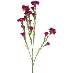 Carnation Dark Pink