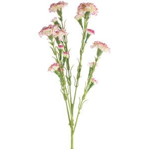 Carnation Variegated Pink