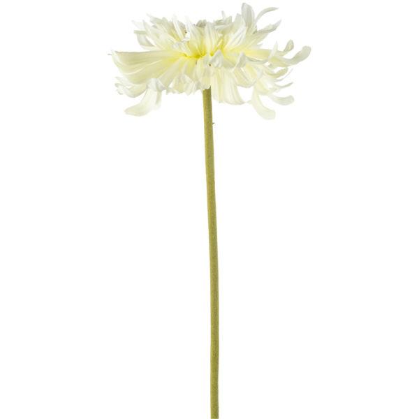 Chrysanthemum White