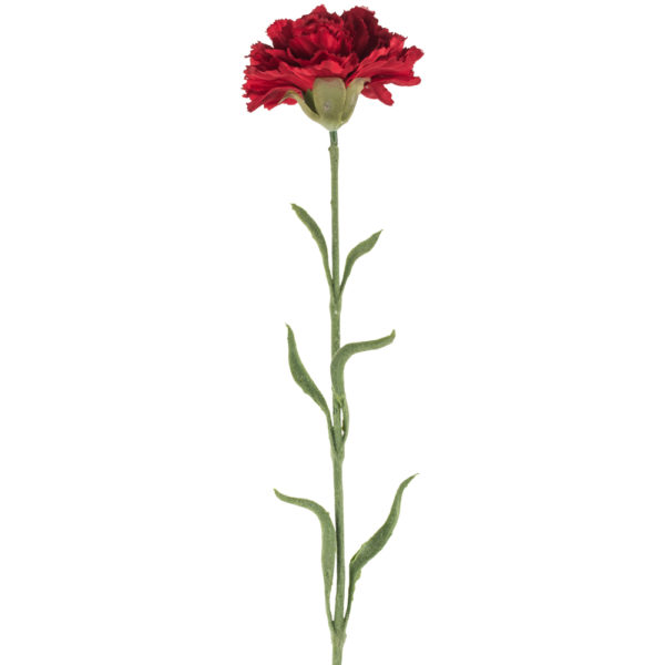 Single Carnation Red