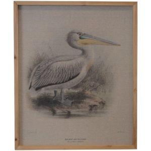 Framed Vintage Print Pelicans