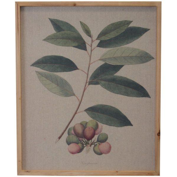 Framed Vintage Print Exotic Fruit