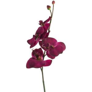 Orchid Spray Purple