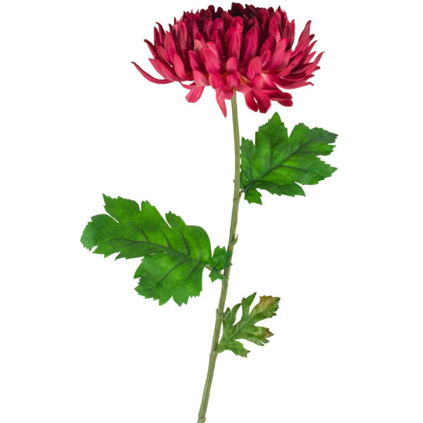 Chrysanthemum Dark Pink