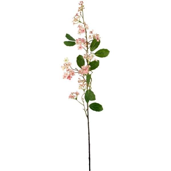 Viburnum Pink