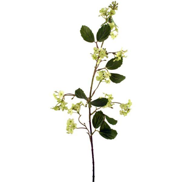 Viburnum Lime