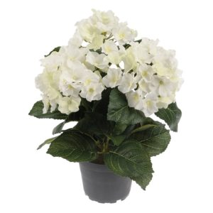 Hortensia in Pot White