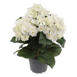Hortensia in Pot White