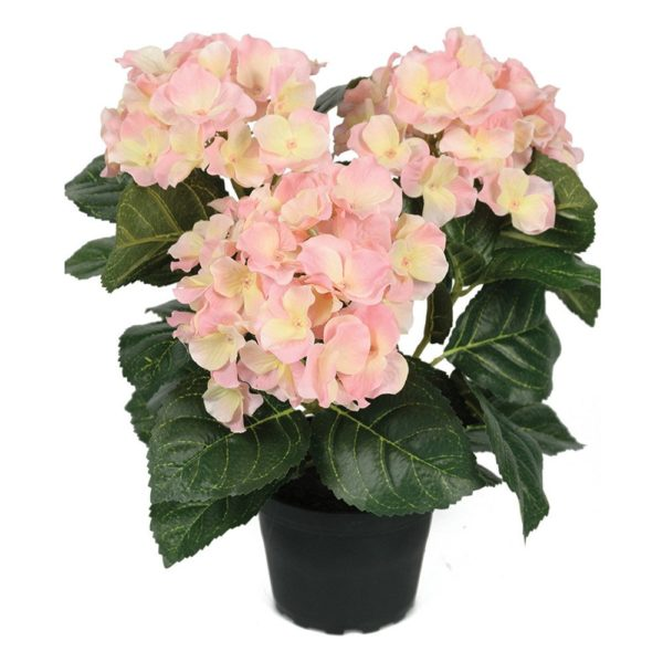 Hortensia in Pot Pink