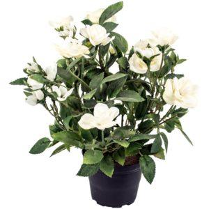 Rose in Pot White