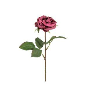 Damask Rose Pink