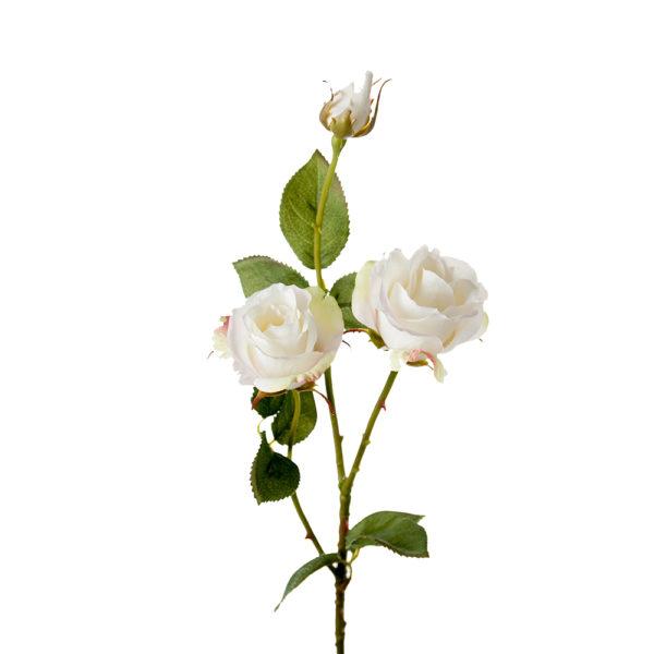 English Rose White