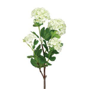 Viburnum Lime h55cm