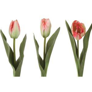 Tulip Mix Multi Pink h36cm