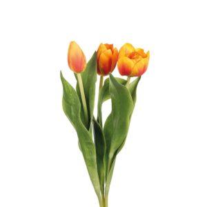 Tulip Mix Burnt Orange