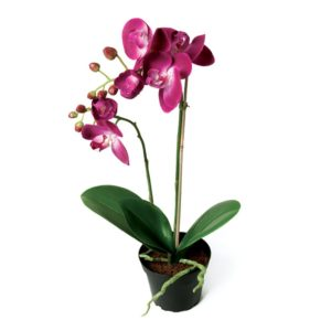 Orchid in Pot Dark Pink