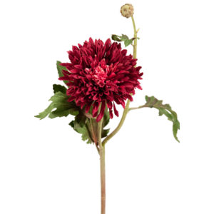 Chrysanthemum Deep Red