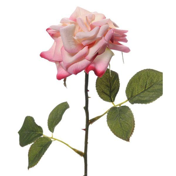 English Rose Pink