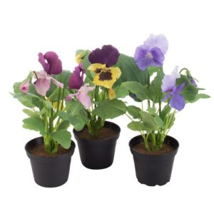 Pansy in Pot Mix