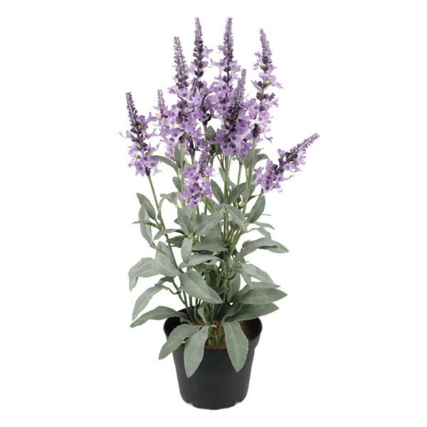 Veronica in Pot Purple