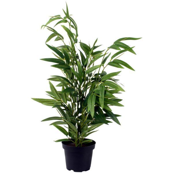 Bamboo in Pot
