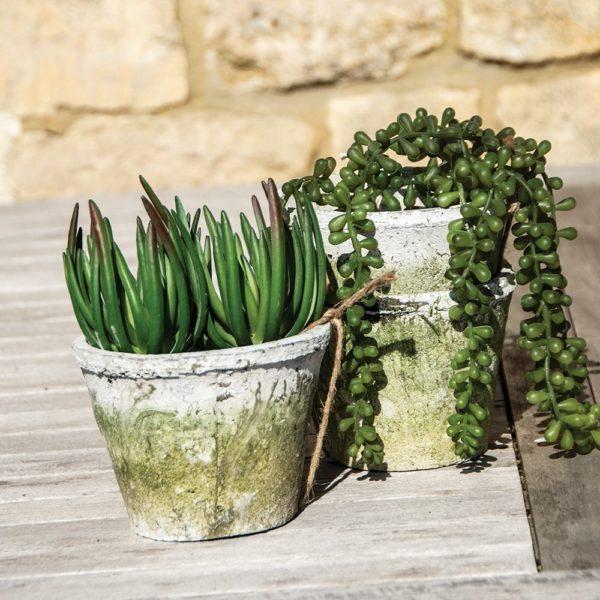 Whitestone Cactus Pots