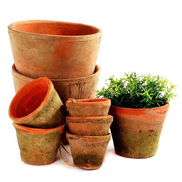 Mossed Redstone Cactus Pot 10x7cm