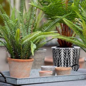 Garden Planters & Plant Pots