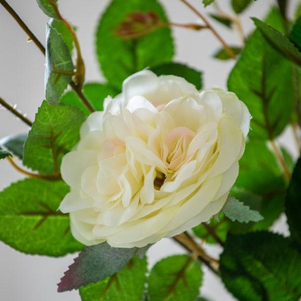 Rose Spray Cream