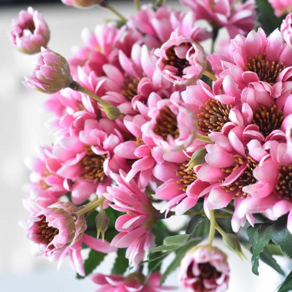 Cineraria Bouquet Pink