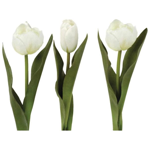 Tulip White Mix