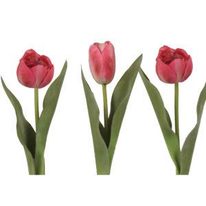 Tulip Pink Mix